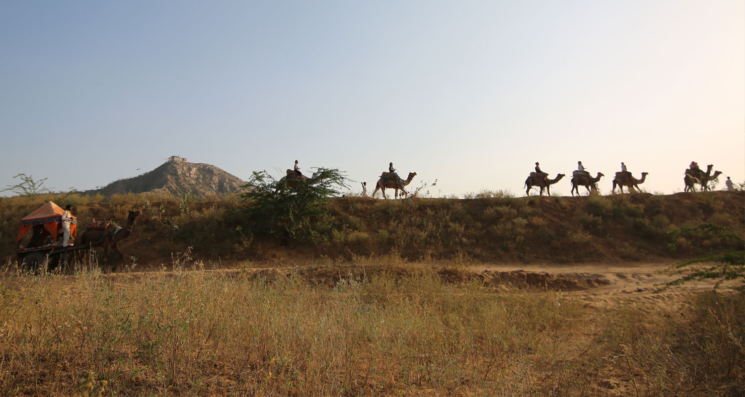 Camel Safari Pushkar